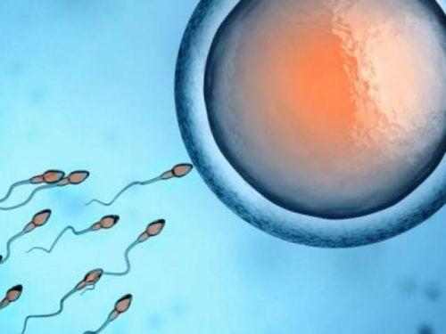 受精の瞬間 妊娠 迷信