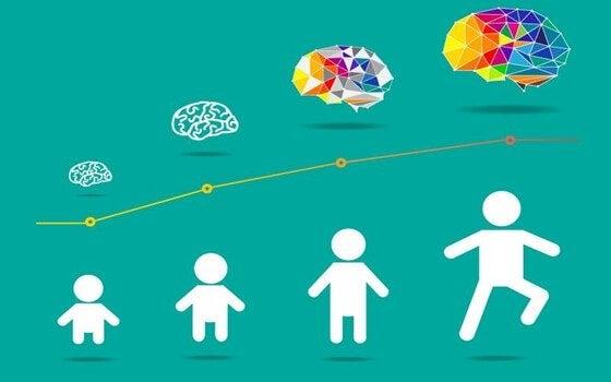 子供の脳の発達