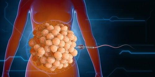 精子 と免疫システム