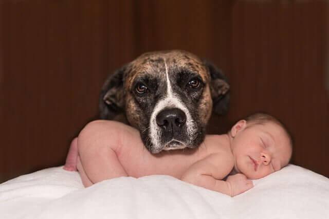 赤ちゃんを迎える   ペット   準備