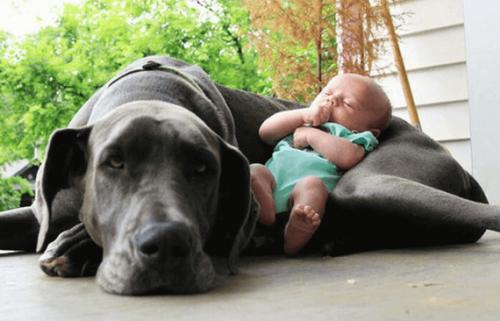 ペットに赤ちゃんを迎える準備をさせよう