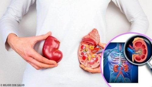 子どもの腎臓がん 腎臓がん 小児期の腎臓がん 子ども
