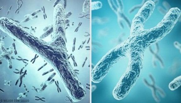 染色体 赤ちゃん 性別