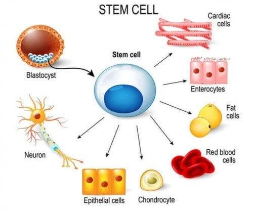幹細胞 について、子どもに説明する方法